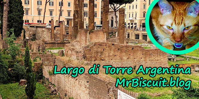 Largo di Torre Argentina: A Most Special Shelter in the Heart of Rome