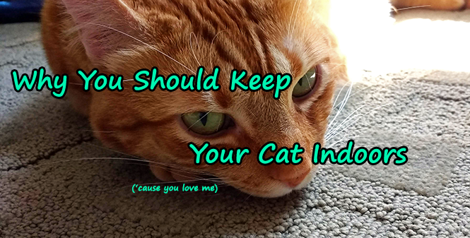 Why Cats Should Stay Indoors
